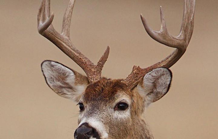 Balancing Deer Nutrition