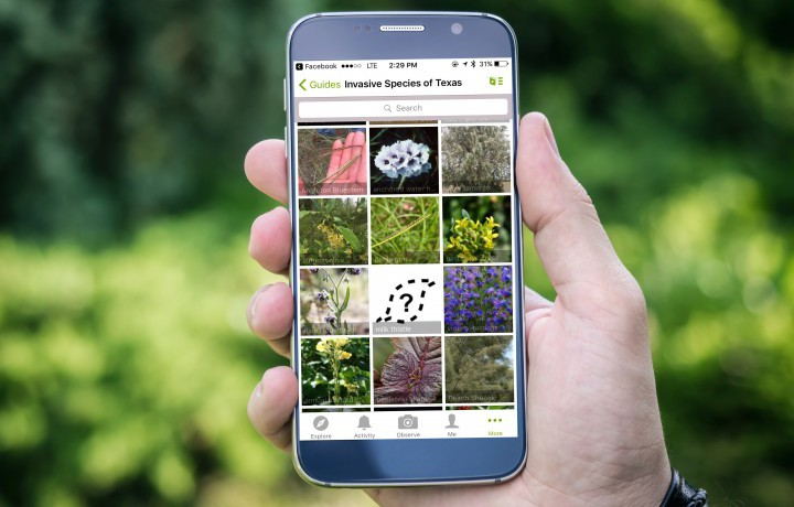 Identifying and Documents Species with iNaturalist: a great tool for private land stewards